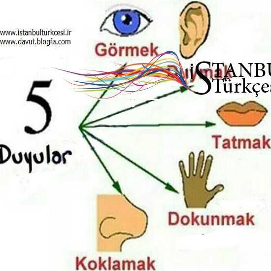 حواس پنجگانه در ترکی استانبولی